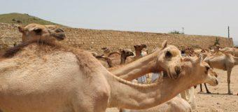 Besøg dog Eritrea…en appel til regering og folketing.